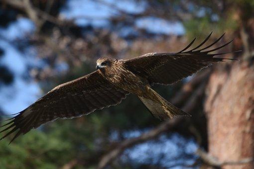 Animal, Wood, Bird, Wild Birds, Raptor, Video, Feathers