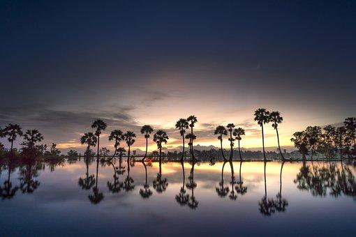 Scenery, Palm, Tree, Sunrise, Background, Sky, Nature