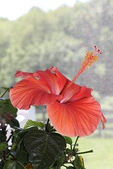 Flower, Hyacinth, Bloom, Spring, Garden, Nature