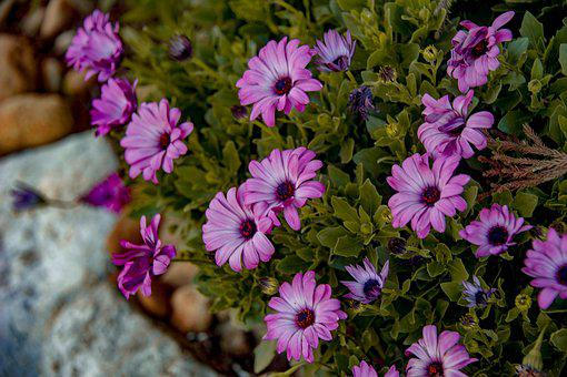 Flowers, Zinnias, Spring, Blossom, Herb, Perennial