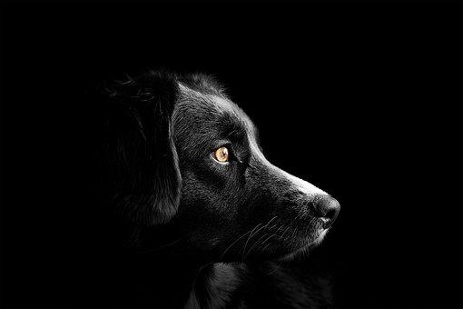 Dog, Cute, Puppy, Animal, Pet, Graphic, Design, Paw