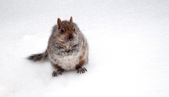 Animal, Squirrel, Cute, Park, Snow, Good Looking