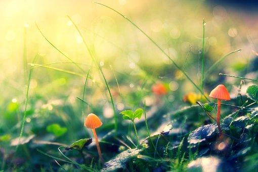 Autumn, Macro, Meadow, Mushrooms, Close Up, Season