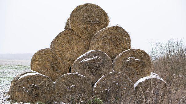 Hay, Bale, Winter, Cold, Overcast, Feed, For Animals