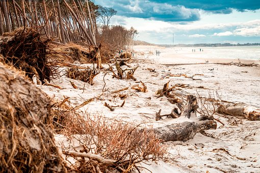 West Beach, Baltic Sea, Trees, Sky, Clouds, Beach, Sand