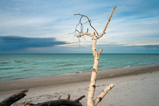 West Beach, Baltic Sea, Branch, Sky, Clouds, Beach