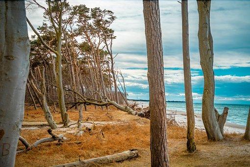 West Beach, Baltic Sea, Trees, Sky, Clouds, Beach