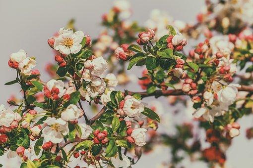 Blossom, Embellishment, Blossom, Bloom, White Red