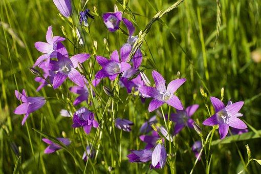 Beautiful Bluebells, Bell, Flower, Bloom, Blue