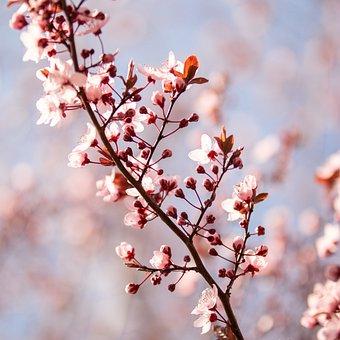 Spring, Flower, Tree, Blossom, Bloom, Plant, Nature