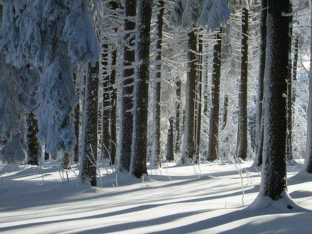 Winter Forest, Landscape, Snow, Winter, Nature, Cold