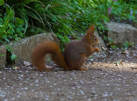 Squirrel, Rodent, Sweet, Eat, Animal, Nature, Furry