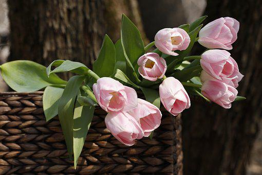 A Bouquet Of Tulips, Spring, Flowers, Gift, Bloom