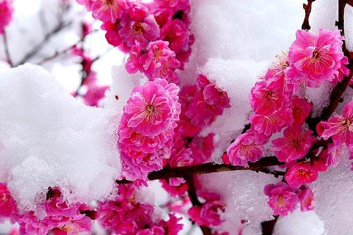 Snow, Flower, Spring, White, Plants, Winter, Garden