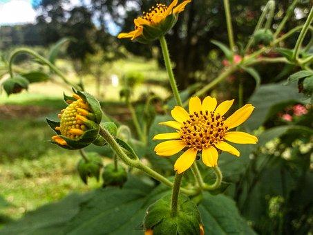 Flower, Yellow, Tea, Garden, Flowers, Nature, Spring