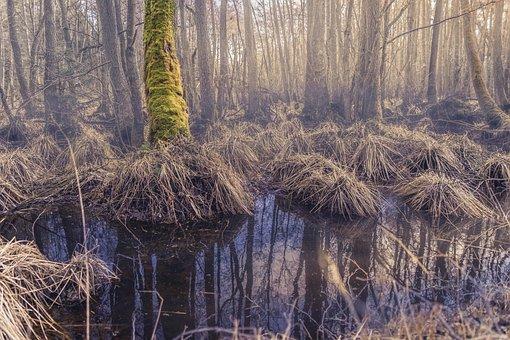 Forest, Moor, Darß, Mystical, Jungle, Baltic Sea