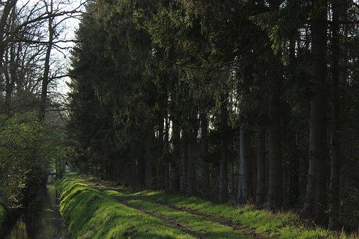 Green, Spring, Nature, Vegetable, Garden, Landscape
