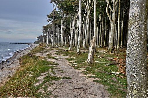 Nature, Baltic Sea Coast, Germany, Mecklenburg