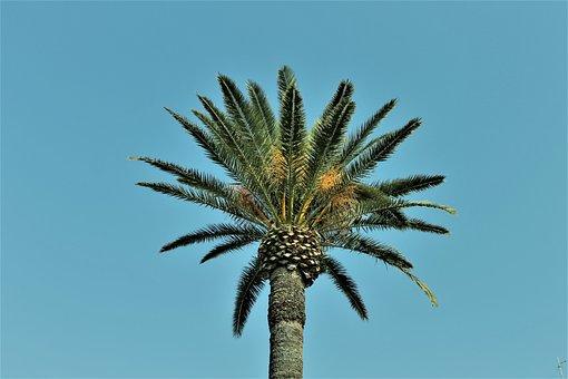 Palm, Nature, Blue Sky, Vegetation, Palm Trees