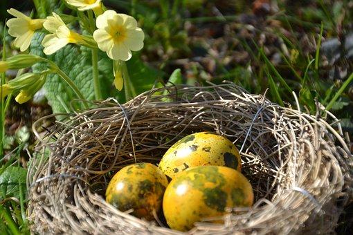 Spring, Cowslip, Yellow, Bloom, Primrose, Plant, Nature