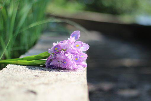 Flower, Purple Flowers, Flowers Water Hyacinth
