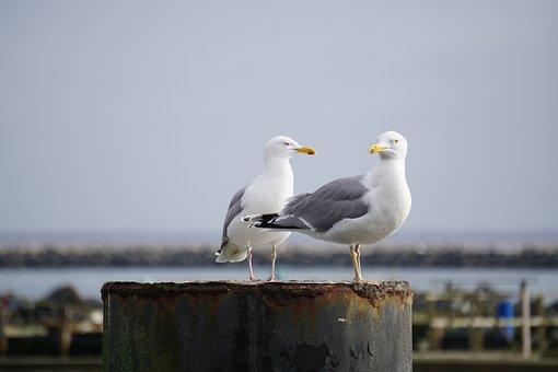Gull, Lake, Bird, Nature, Water, Sea, Animal, Sky