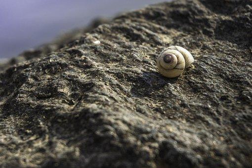 Snail, Rock, Stone, Snail House, Shell, Snail Shell