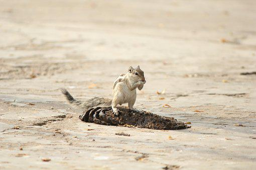 Squirrel, Animal, Nature, Tail, Small, Nut, Outside