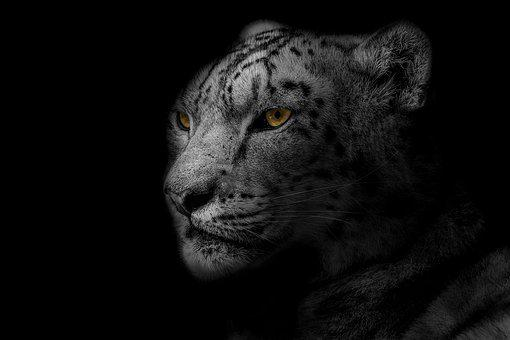 Leopard, Animal, Design, Nature, Wild, Safari, Wildlife