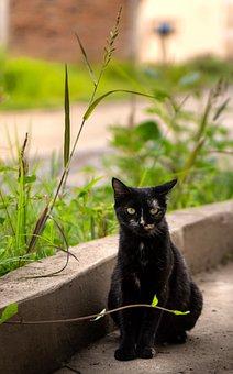 Cat, Animal, Eyes, Feline, Grass, Nature, Amazing, Pet