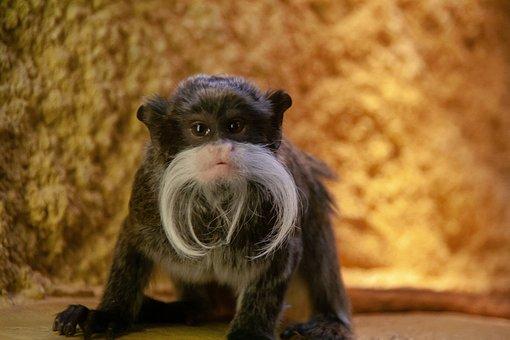 Cute, Monkey, Sweet, Background, Animal, Wild, Focus