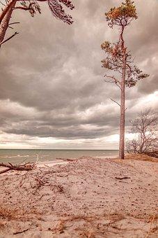 Baltic Sea, West Beach, Tree, Clouds, Sea