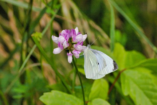 Butterfly, Butterflies, Insects, Flower, Wings, Blossom