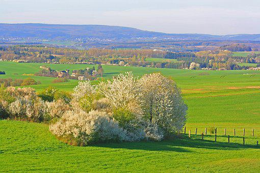 Spring, Nature, Landscape, Cherry Blossom, Saarland