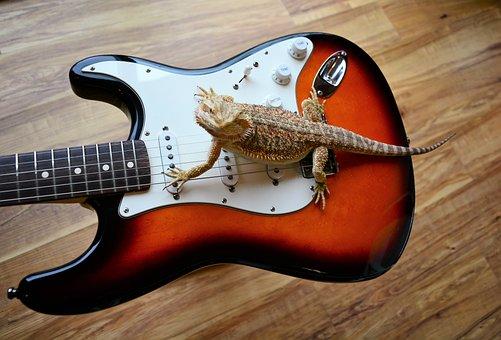 Guitar, Electric, Lizard, Dragon, Claws, Sharp, Fender