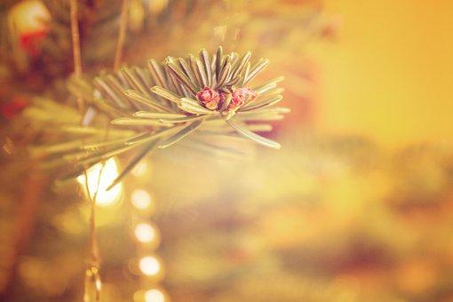 Christmas, Tree, Decoration, Advent
