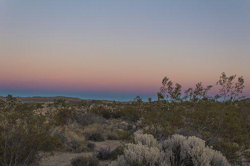 Desert, Sky, Joshua Tree, Gradient, California, Dry
