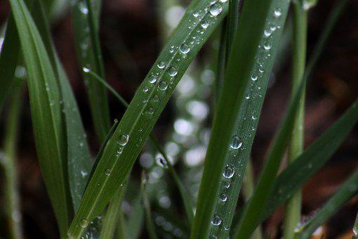 Grass, Drip, Morning, Meadow, Drop Of Water, Wet