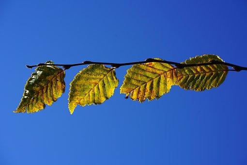 Leaves, Fall Color, Fall Foliage, Autumn Colours