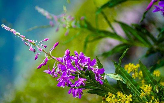Flower, Nice, Bella, Nature, Flowers, Summer, Bloom
