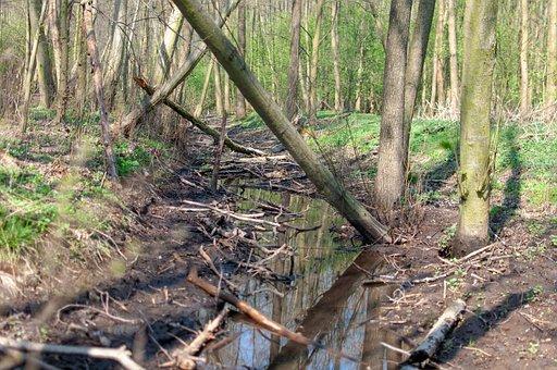 Forest, Brook, Tree, Spring, Nature, River, Torrent