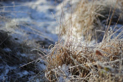 Winter, Frost, Nature, Grass, Pasture, Background, Blue