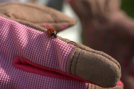 Gardening, Ladybug, Glove, Garden, Work, Work Gloves