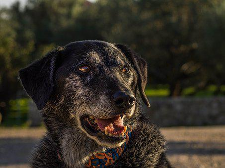 Dog, Portrait, Old, Grey, Animal, Pet, Fur, Snout, Head