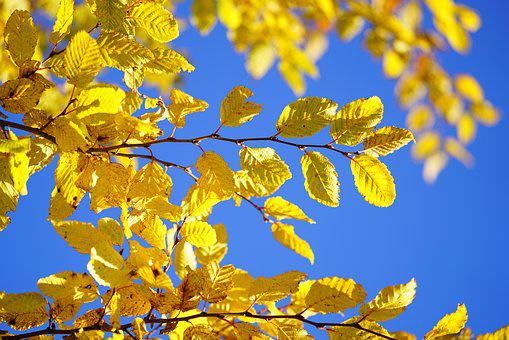 Leaves, Fall Color, Fall Foliage, Autumn Colours