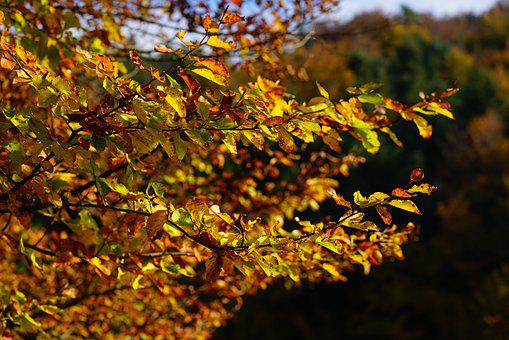 Autumn, Leaves, Fall Foliage, Tree, Autumn Tree