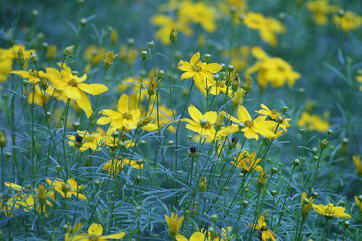 Flower, Flowers, Meadow, Field, Wildflower, Garden