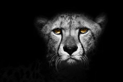 Animal, Cheetah, Exotic, Wild, Design, Nature, Leopard