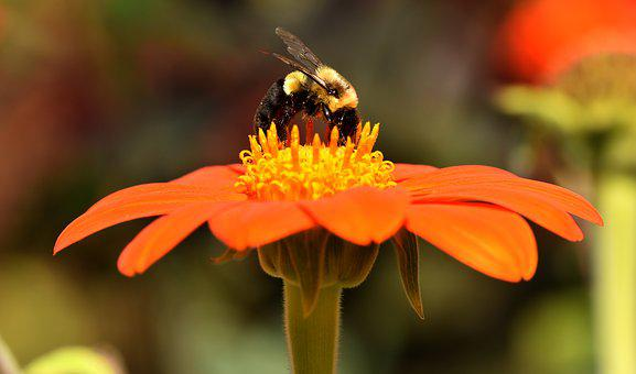 Bees, Insects, Nature, Flower, Pollen, Collect, Garden