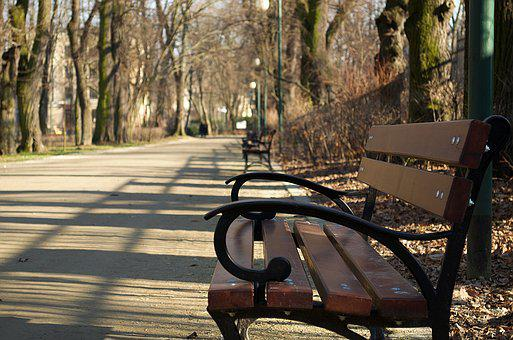 Bench, Park, Tree, The Path, Forest
